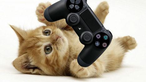 468px-Kitten_promo_ps4