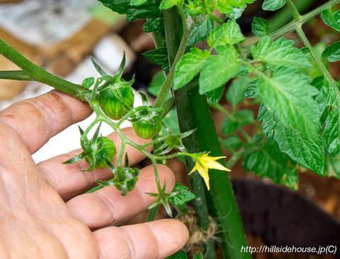 2019-05-19-Tomaten01