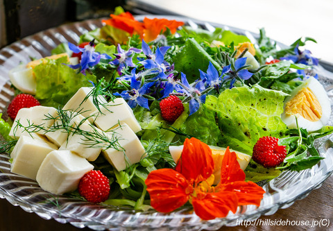 2019-05-18-Borretsch-Salat03