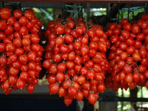 pomodorini-del-Piennolo