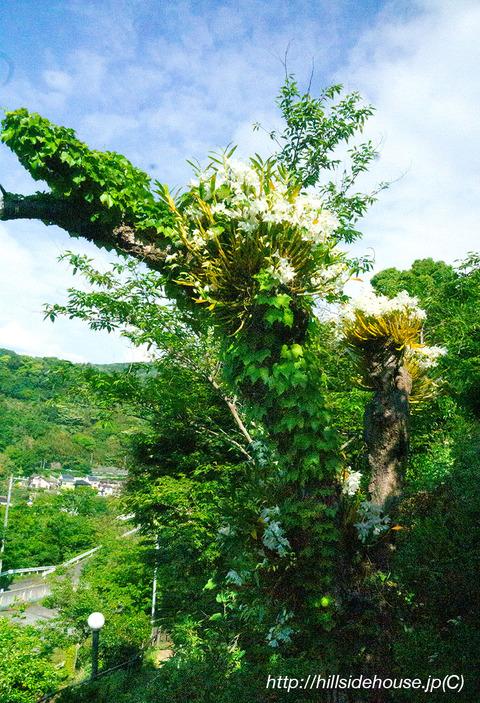 2019-05-16-orchideen-dendro03