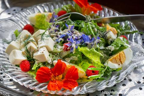 2019-05-18-Borretsch-Salat