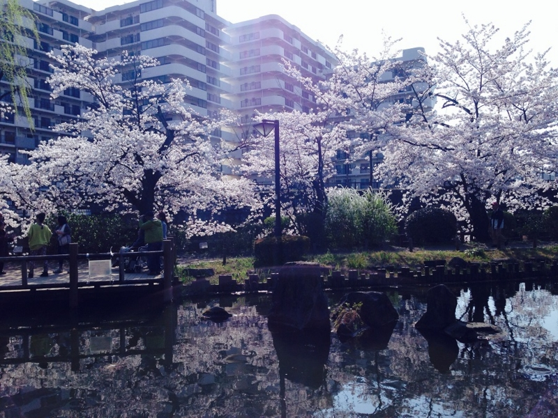 f:id:aku_soshiki:20150330200226j:plain