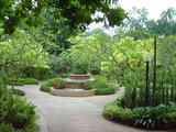 シンガポ 植物園①