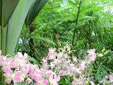 シンガポ 蘭園①