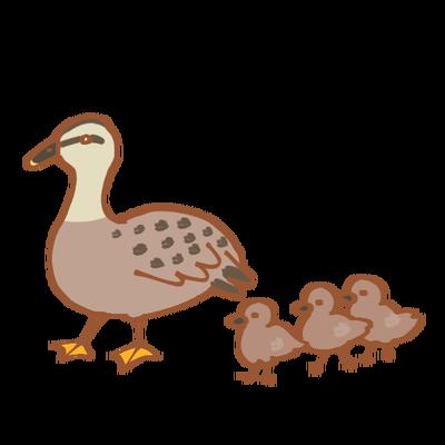 illustrain02-bird13