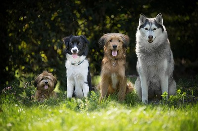 dogs-4189517_640