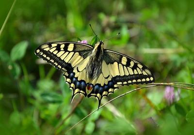 butterfly-491166_640