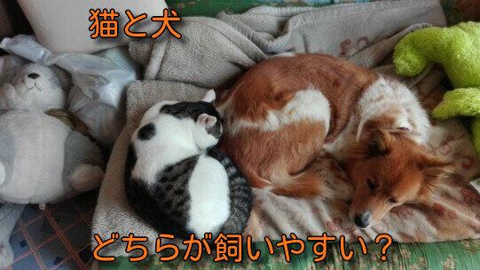 猫と犬19