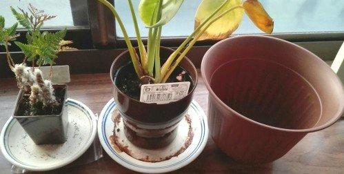 観葉植物18