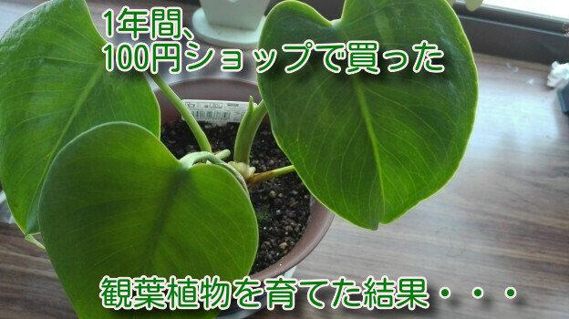 観葉植物1年間55