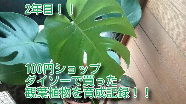 観葉植物3-33