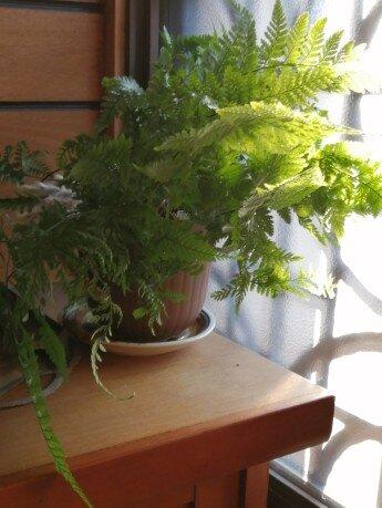 観葉植物3-11