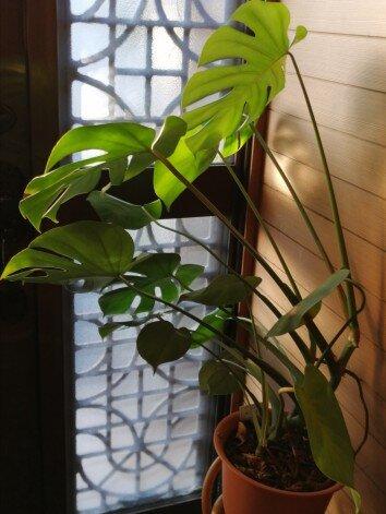 観葉植物3-10