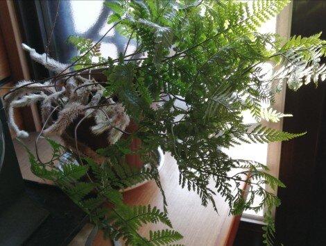 観葉植物3-7