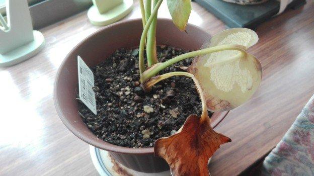 観葉植物1年2