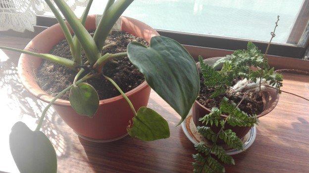 観葉植物1年36