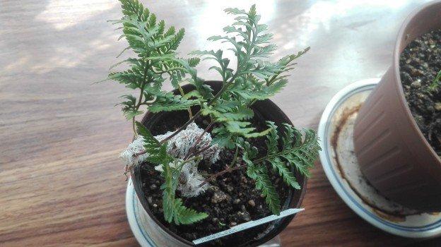 観葉植物1年6