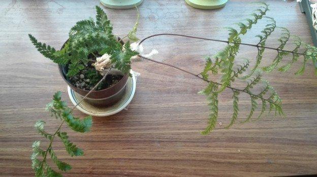 観葉植物1年26