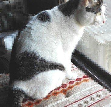 プチブロック飼い猫3