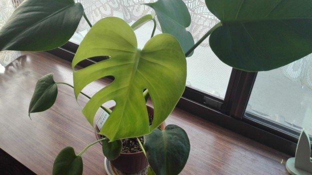 観葉植物1年25