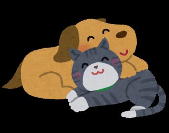 猫と犬15