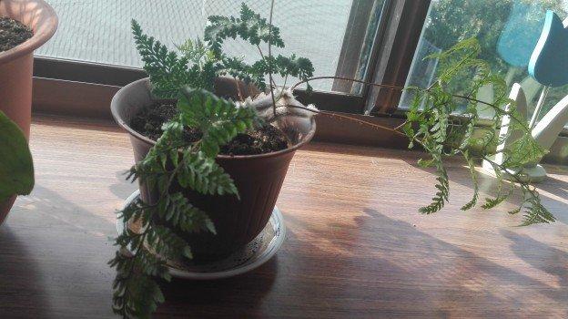 観葉植物1年38