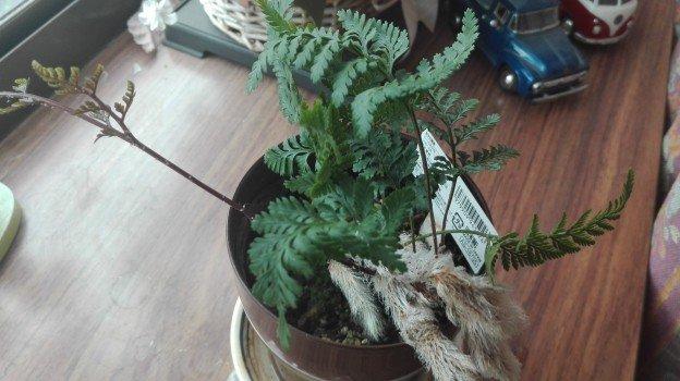 観葉植物1年21