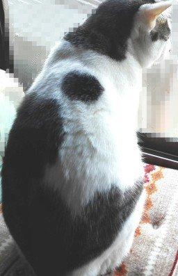 プチブロック飼い猫1