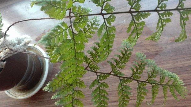 観葉植物1年27