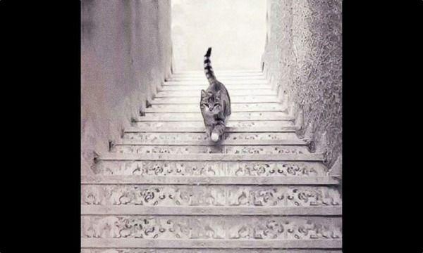 【画像】この猫って「階段を登ってる」「階段を下ってる」どっちなの?