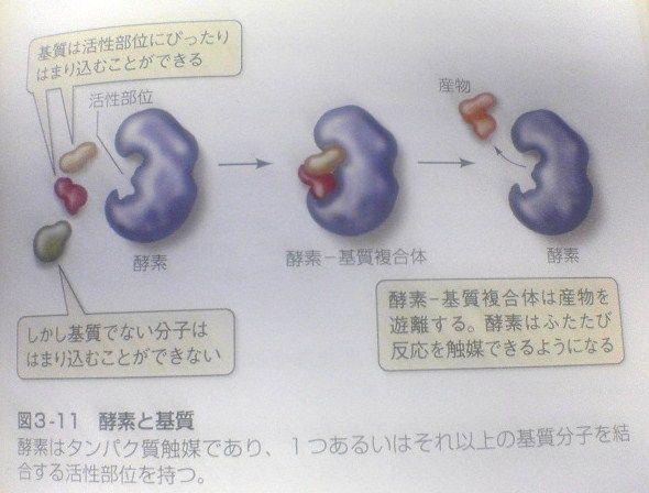 学 大学 の 教科書 生物 学習方法/高校生物
