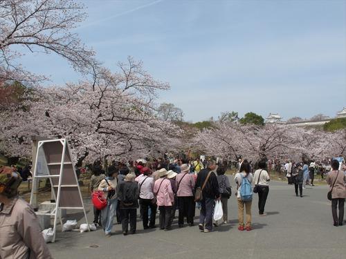 姫路城の桜 4月1日