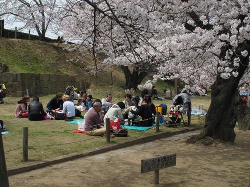 姫路城の桜 4月1日 お花見
