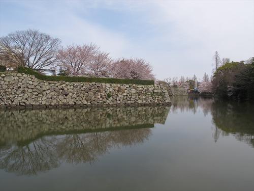 姫路城の桜 4月1日 内堀