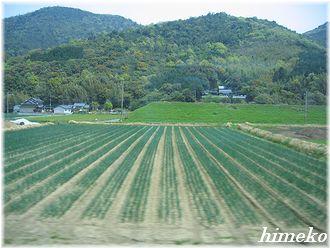 20100408 宇佐の景色330himeko