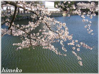 20100403 お堀と桜330himeko