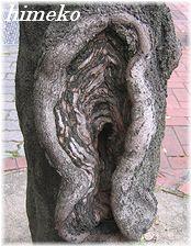 20100411 ムンクの叫びの木240himeko