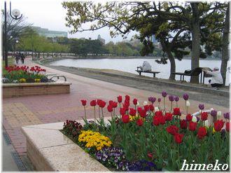 20100411 大濠公園①330himeko