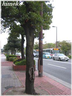 20100411 街路樹himeko