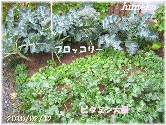 20100211 001 330日付himeko
