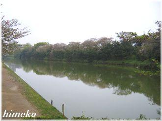 20100411 舞鶴公園のお濠③330himeko