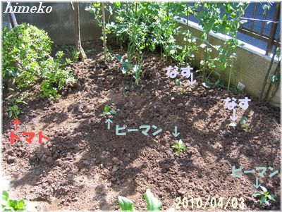 20100403お庭400himeko