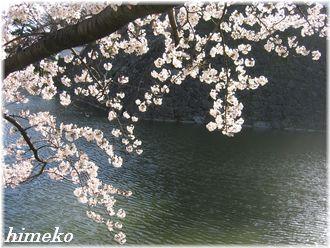 20100403お堀と桜330himeko