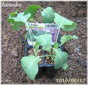 20100212 001苗 300日付himeko