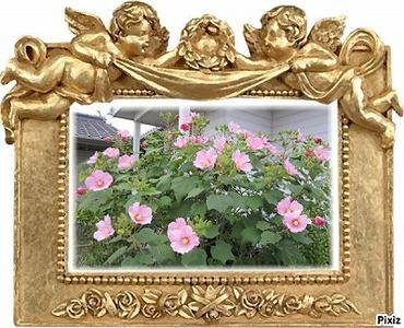 芙蓉の花�