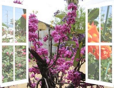 窓から見える花