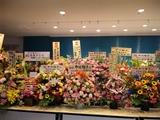 中川翔子LIVE@パシフィコ横浜b