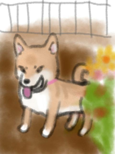 sketch-1588250494083