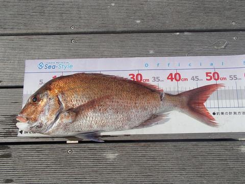 eguti52,5cm